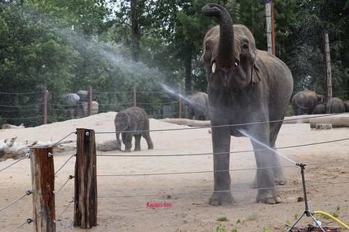 20190701 elephant 14.jpg