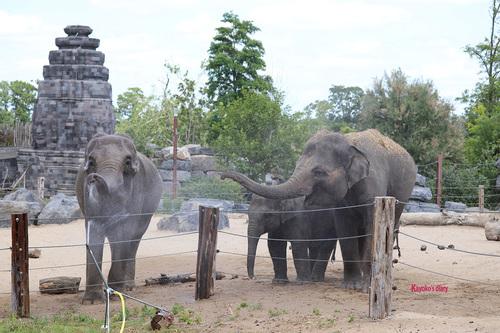 20190701 elephant 17.jpg