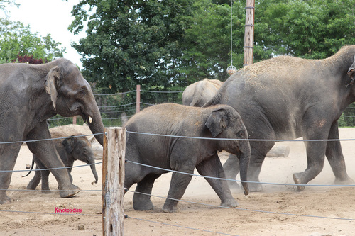 20190701 elephant 18.jpg
