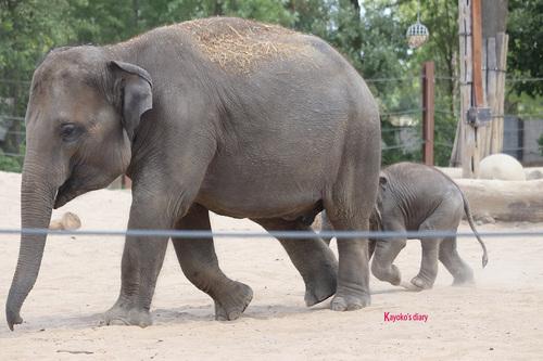 20190701 elephant 19.jpg