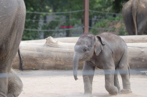 20190701 elephant 20.jpg