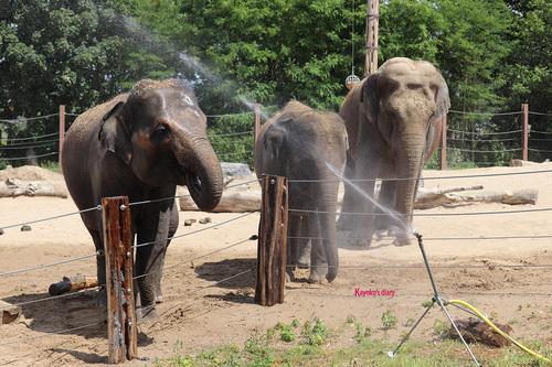 20190701 elephant 21.jpg
