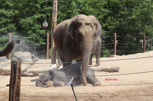 20190701 elephant 24.jpg