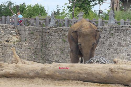 20190701 elephant 25.jpg