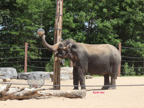 20190701 elephant 26.jpg