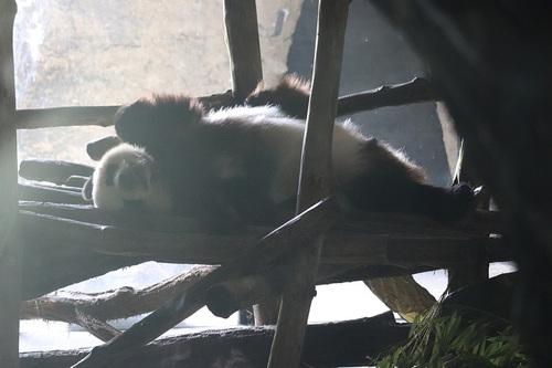 20190701 panda 15.jpg