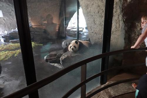 20190701 panda 17.jpg