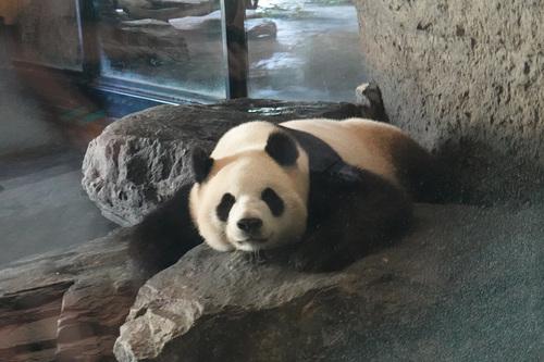 20190701 panda 18.jpg