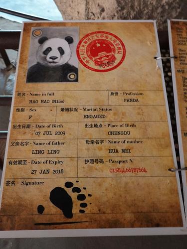 20190701 panda 19.jpg