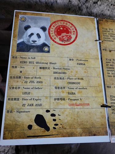 20190701 panda 20.jpg