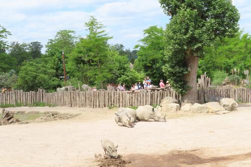 20190701 zoo15.jpg