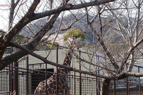 20200321 zoo16.jpg