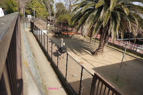 20200321 zoo20.jpg