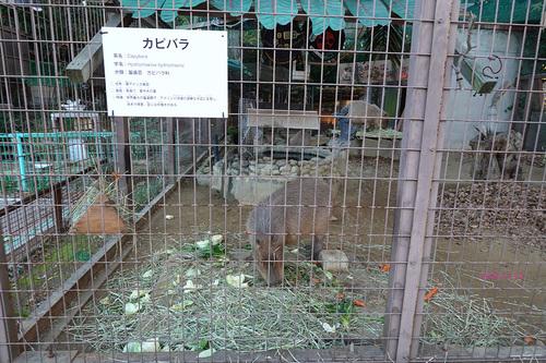 20201125 zoo24.jpg