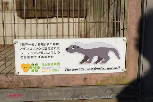 20201127 zoo 13.jpg