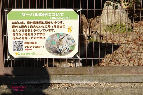 20201127 zoo 15.jpg