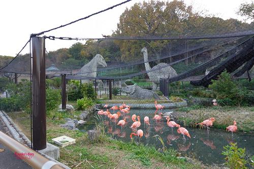 20201127 zoo 29.jpg