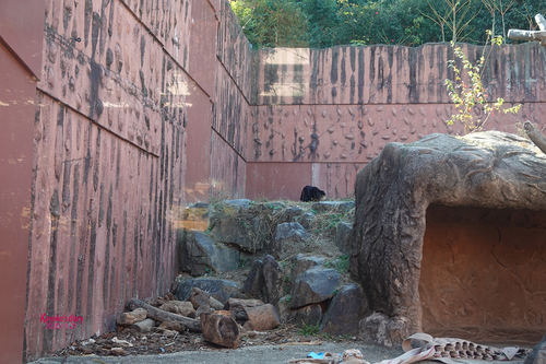 20201127 zoo 9.jpg