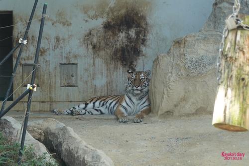 20210319 zoo10.jpg