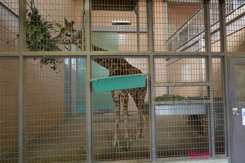 20210319 zoo22.jpg