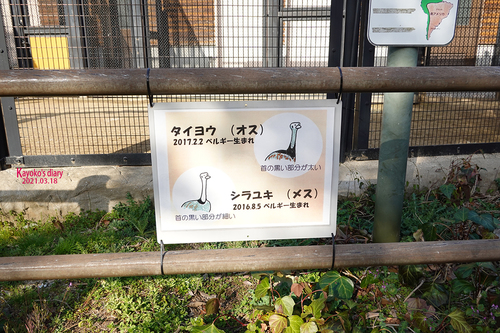 20210319 zoo25.jpg