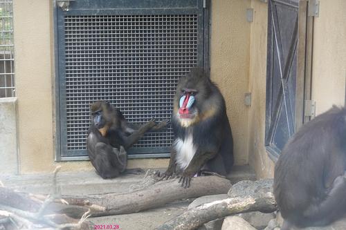 20210328 zoo12.jpg