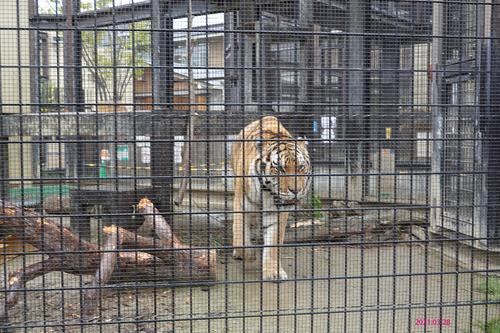20210328 zoo16.jpg