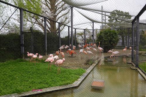 20210328 zoo33.jpg