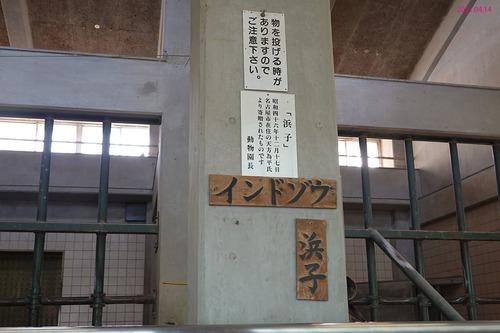 20210414 hamakosan15.jpg