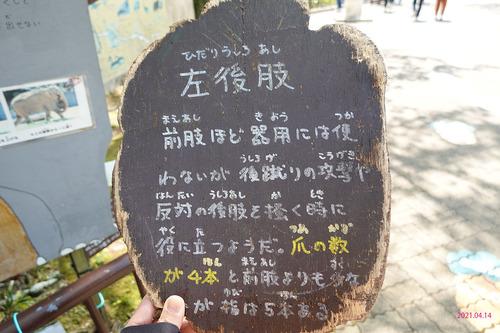 20210414 hamakosan27.jpg