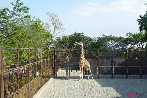 20210424 zoo14.jpg