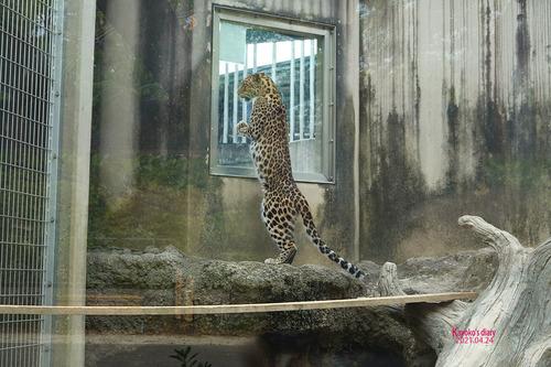 20210424 zoo19.jpg
