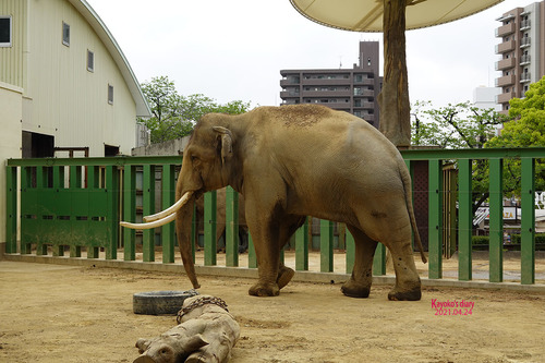 20210424 zoo22.jpg