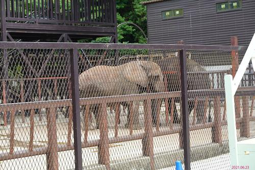 20210623 zoo12 sandy yumeka.jpg