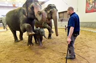HMPpark_elephant6_11.jpg