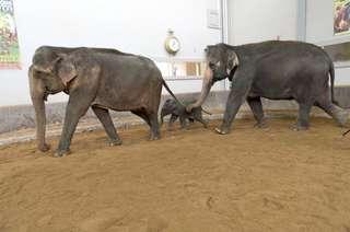 HMPpark_elephant6_7.jpg